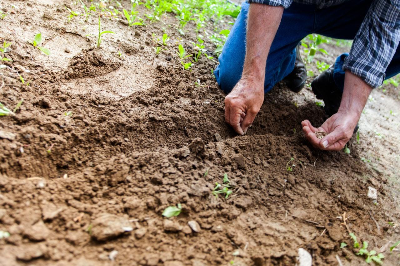 """""""O semeador saiu a semear sua semente"""""""